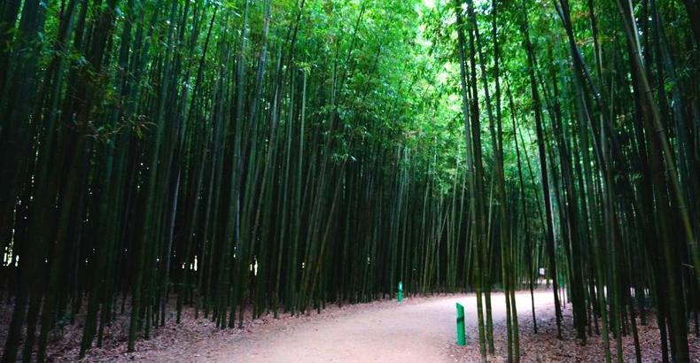 태화강 국가정원 십리대숲 이미지입니다.